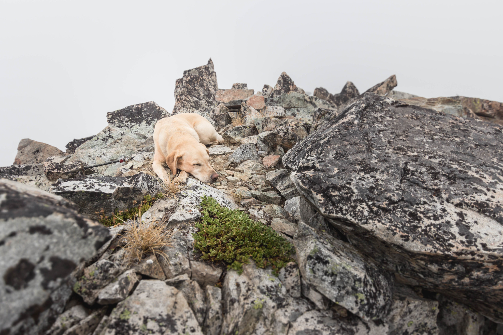 Summit dogs on Choral Peak