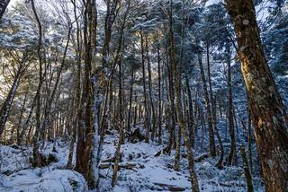 小金沢山への樹林帯