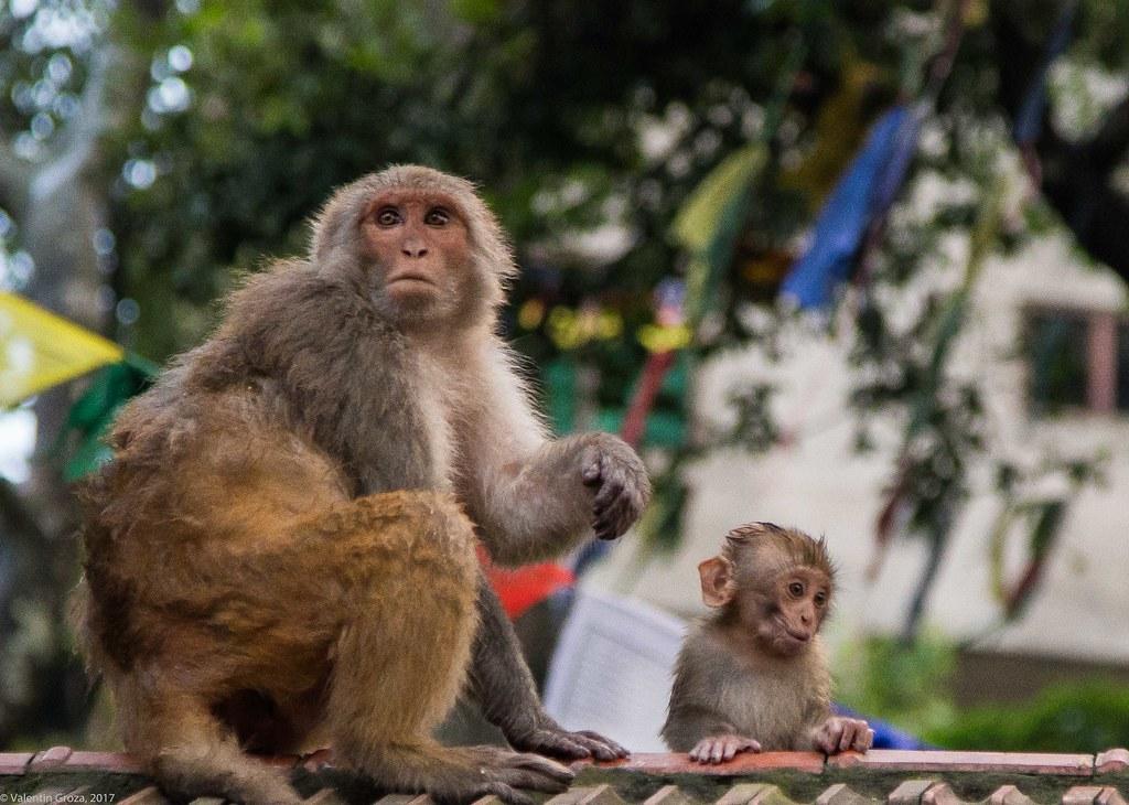 in Kathmandu_17_2 maimute