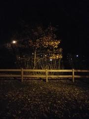 Ronan Park at Night