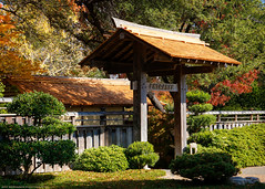 The Fort Worth Japanese Garden