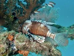 Diving Mauritius 2017