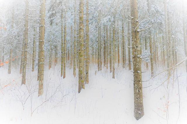 blanche , neige