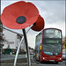 Poppies and a bus