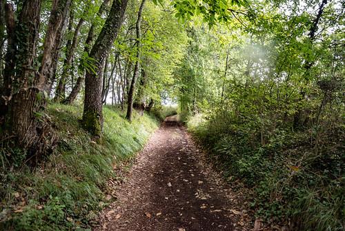 36-Un beau chemin creux