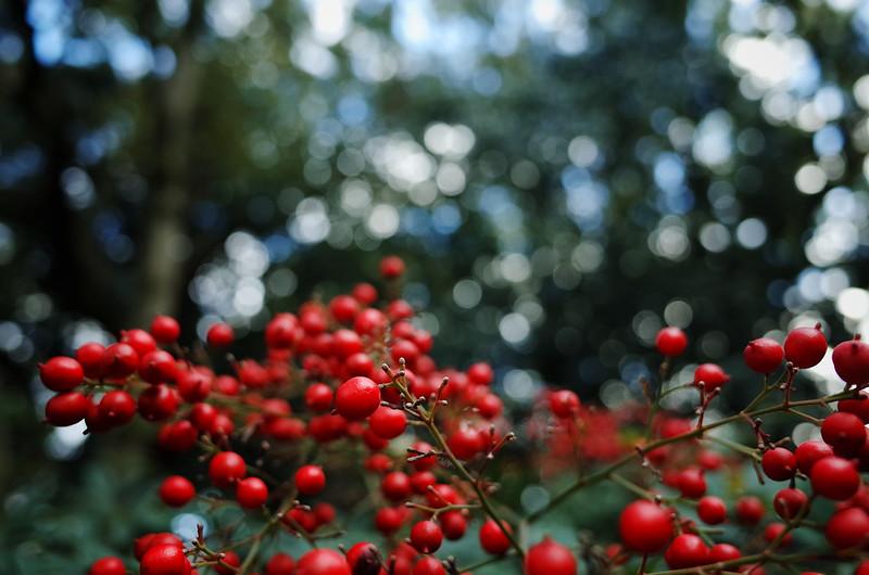 赤い実の季節