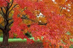 "Cincinnati – Spring Grove Cemetery & Arboretum ""Autumn – Inside & Outside"""