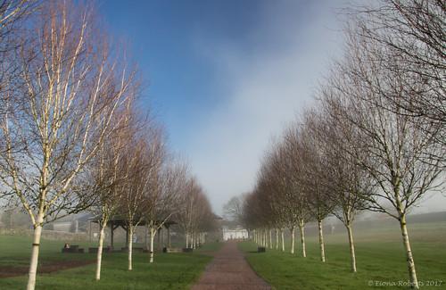 llanarthney wales unitedkingdom gb wfc nationalbotanicgardensofwales mist