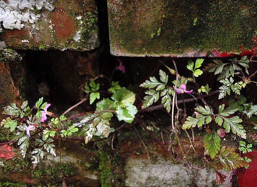 Plants growing in between the bricks at 1000 Parker St in Vancouver, Canada