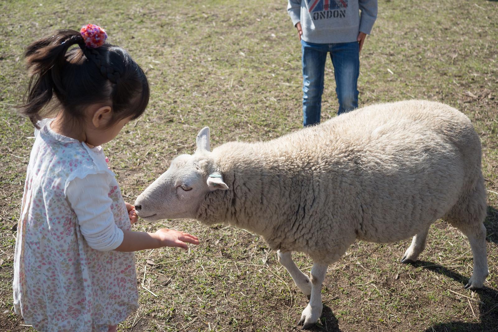 Mother_Farm_chiba-60