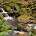 Deep in Padley Gorge