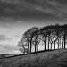 Twenty Trees by Lindsey1611
