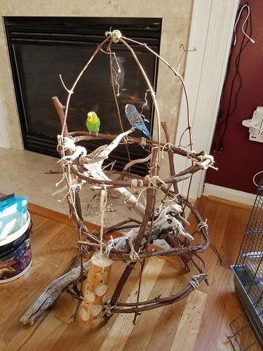 Brennan's bird cage