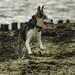 Bouncing dog