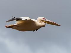 2017 Lac Manyara, oiseaux