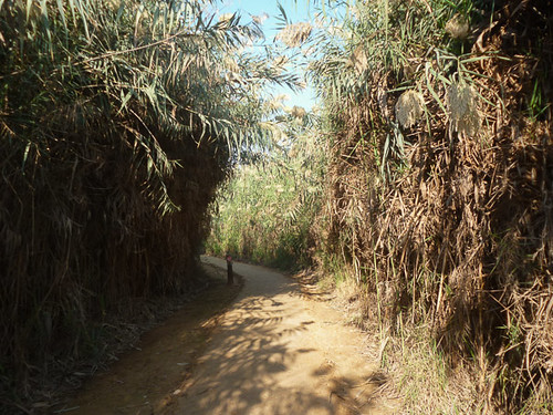 Reed tunnel