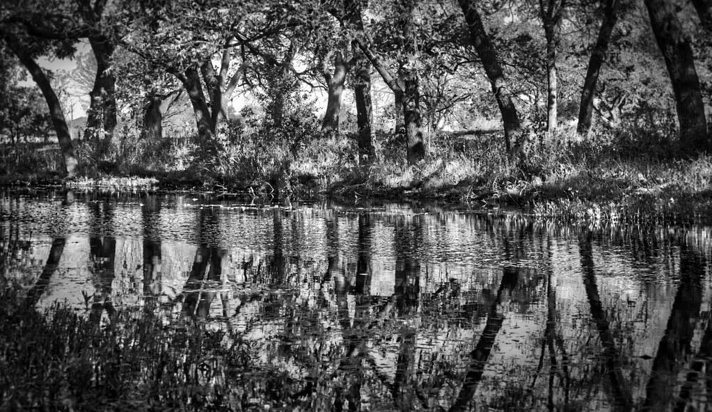 Williamson County Texas Tripcarta