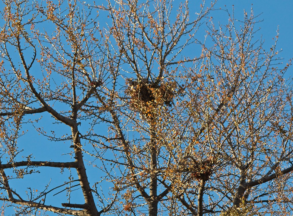 New hawk nest in Tompkins Square