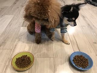 おすすめのドッグフードを食べる犬
