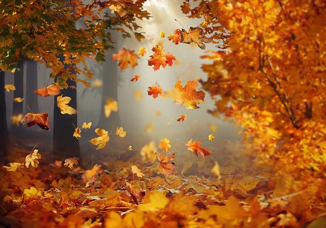 Autumn Leaves Falling ....