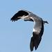 Heron Greylake RSPB F00006 D210bob DSC_7357