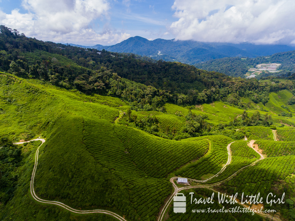 Drone Shot, Travel With Little Girl at Cameron Highlands, Malaysia