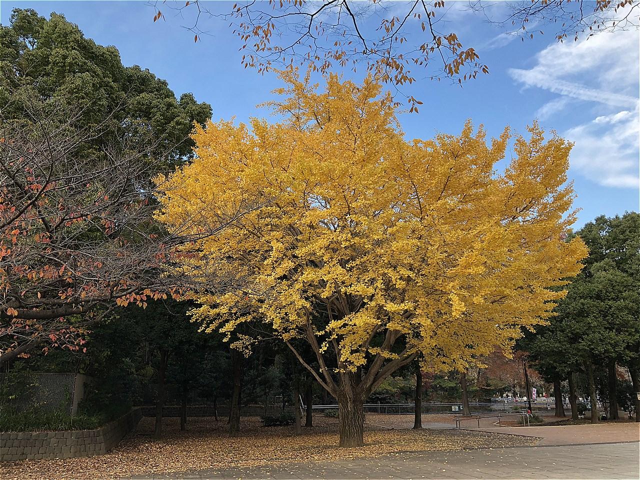 20171125_光が丘 (8)