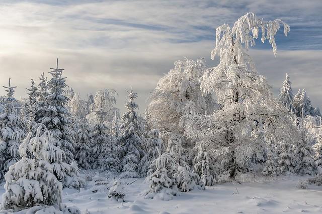 *Erbeskopf - Winter*