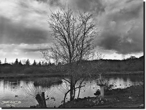 explore tranquil quiet calm serene sober static peaceful sutherlin oregon usa park lake birds water trees reflections interrestingness clouds back white fallseason