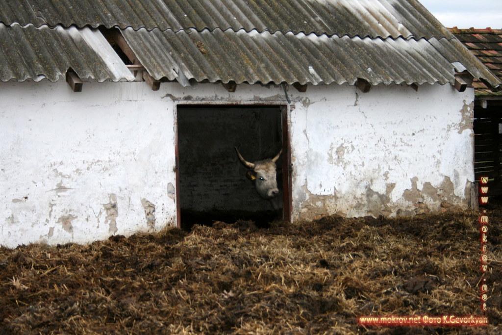 Конная Ферма Пуста — Венгрия пейзажи