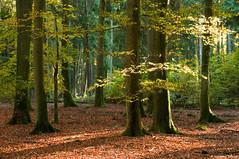 Herbst im Schwarzstorchwald