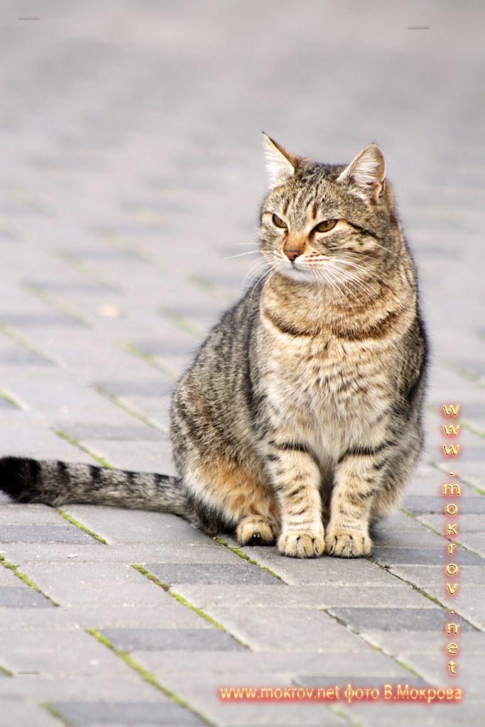 фотографии Кошек в Городе Анапа.