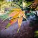 Leaf, LR6-300729-web