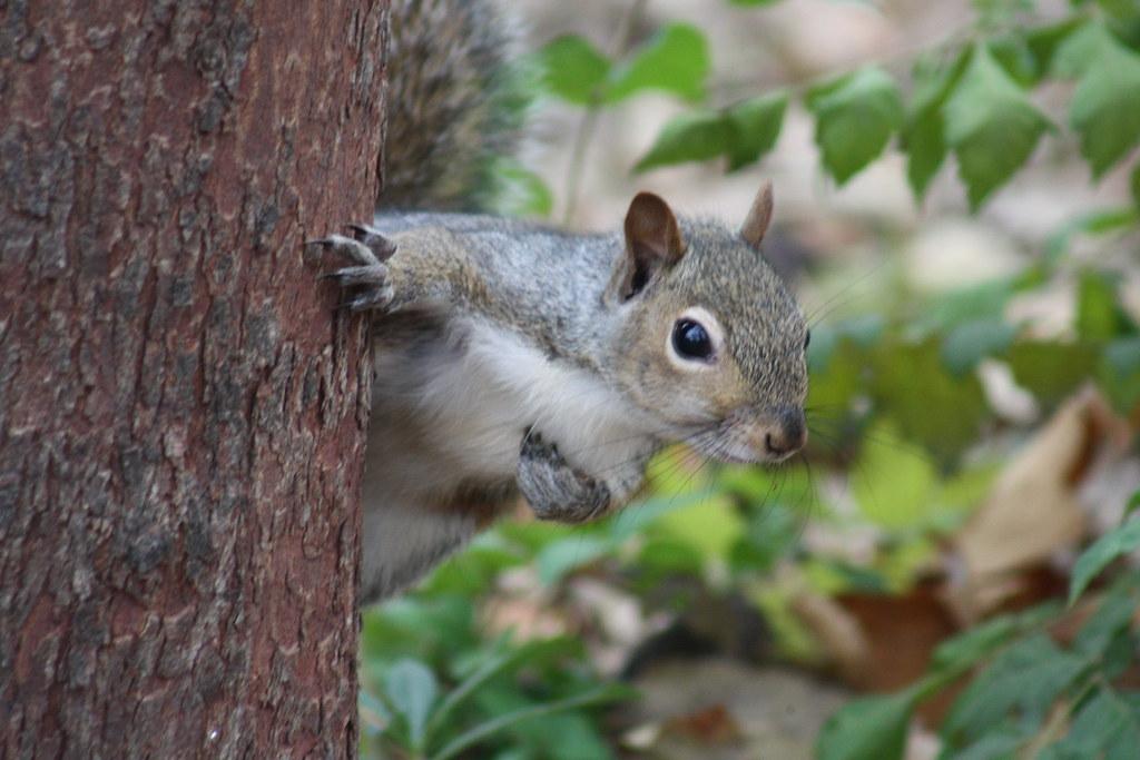 Squirrel Invasion 16