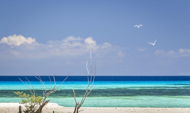 Tropical Paradise sea view.