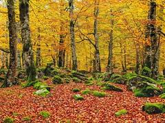 Bosques en Otoño.