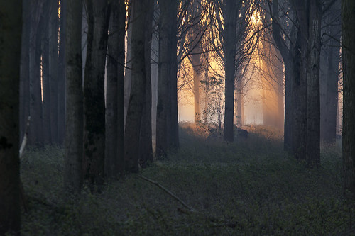 play of light in a forest....