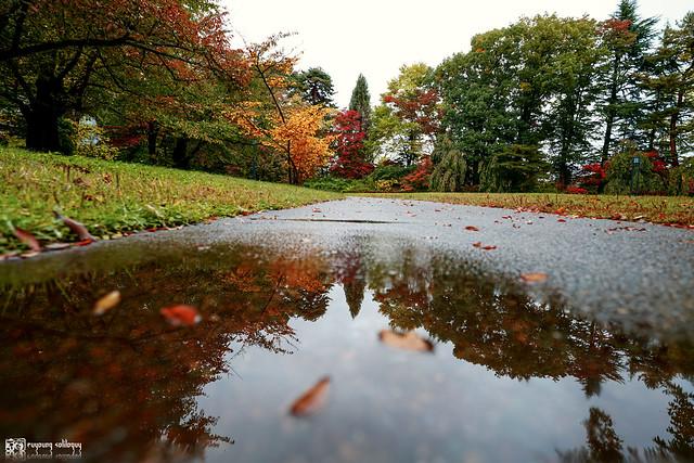 秋色是山巒中的一抹紅 | 19