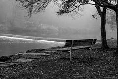 """Park Bench """"In Memory of.."""" ©2017 Steven Karp"""
