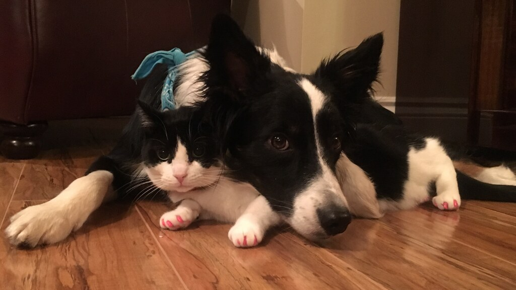 Eddie (dog) & Kiki (cat)