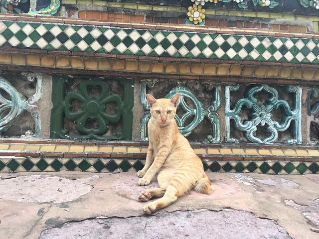魅せるポーズの猫