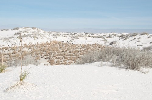 White Sands dunes with shrubs