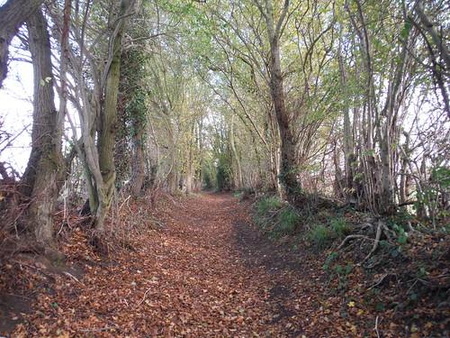 Towards Morley Hall