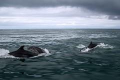 Dolphin survey trip Nov 2017