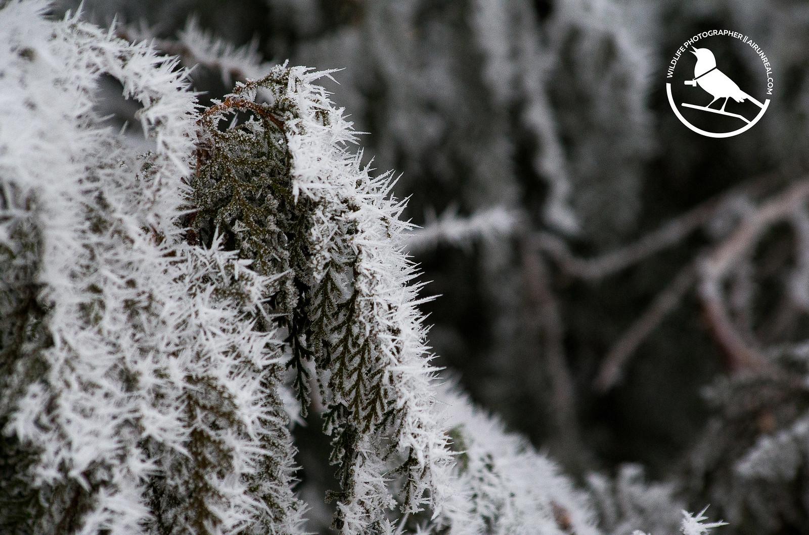 No men's winter // 20171203