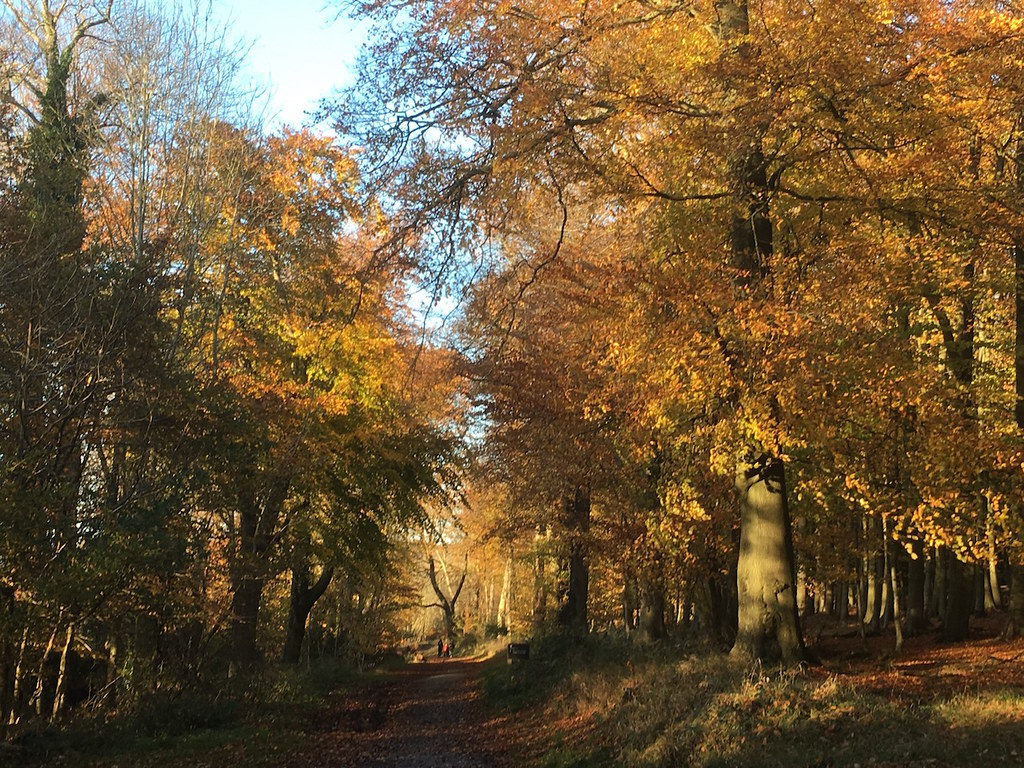 Ashridge Estate Tring Circular walk