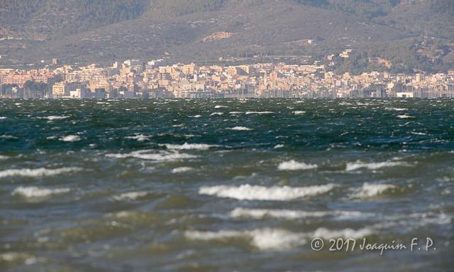 Mar picada en la Bahía de los Alfaques