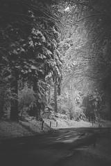 Waldstraße im Winter