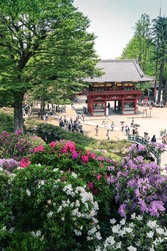 Garden at Nezu Shrine