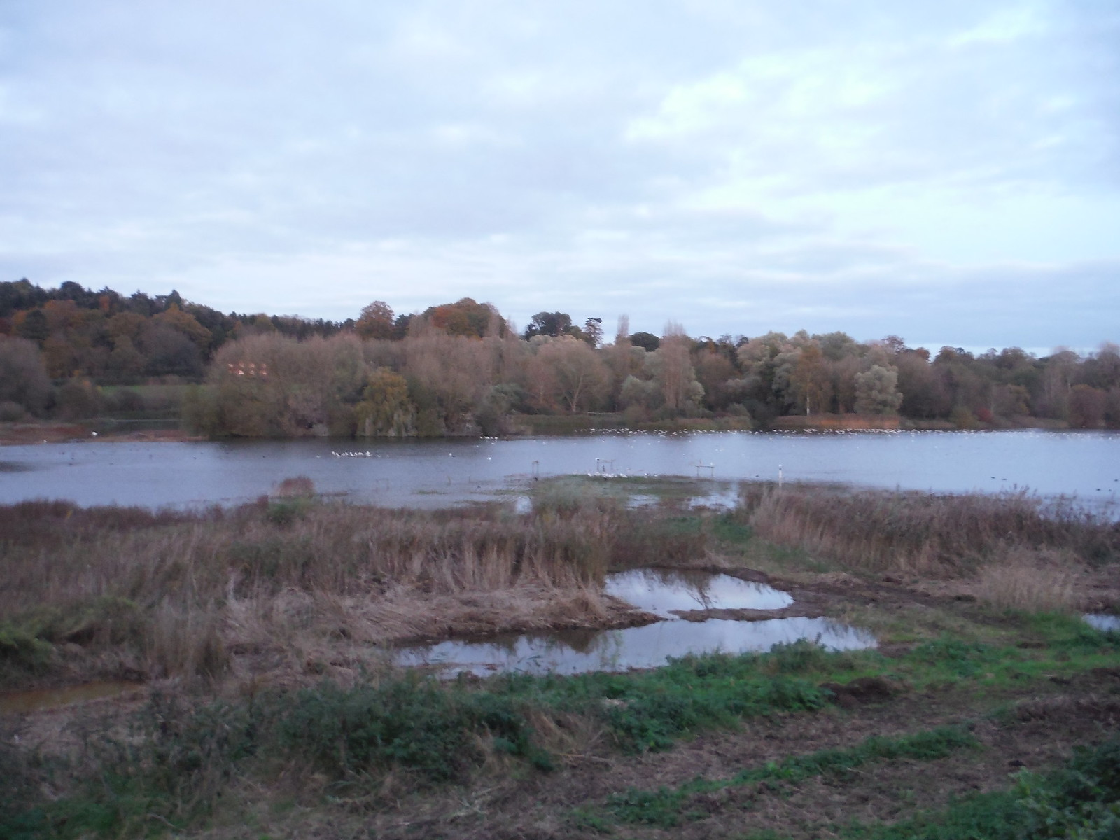 Amwell Nature Reserve SWC Walk 165 - St. Margarets Circular